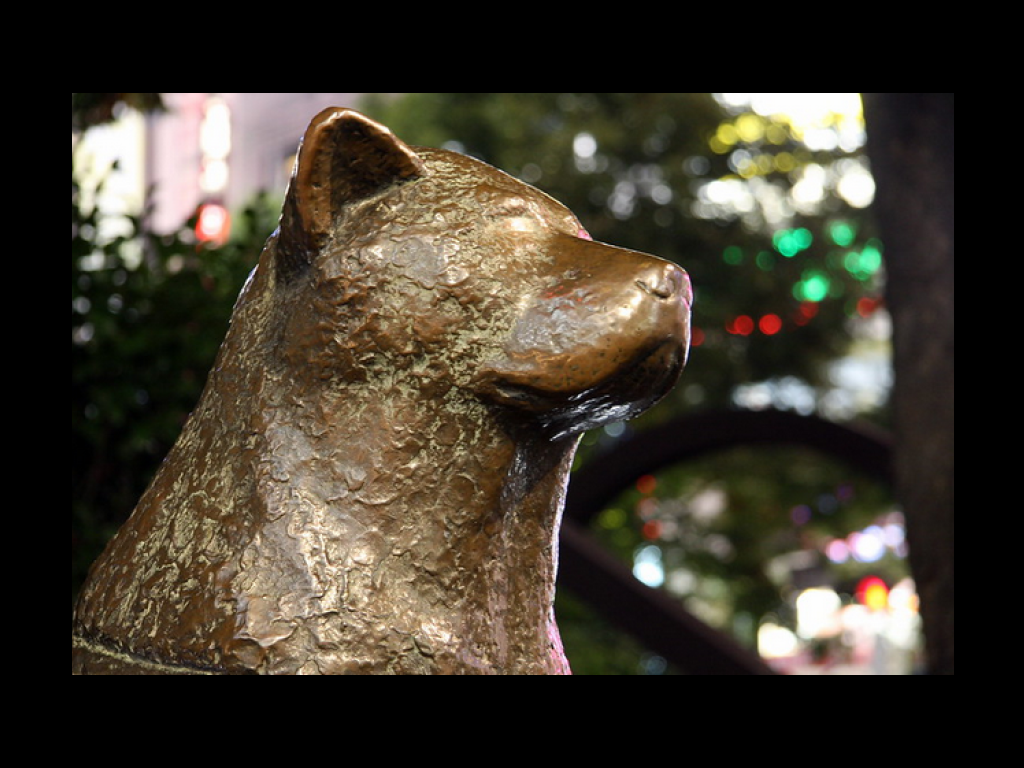 A side view of the Hachiko memorial statue