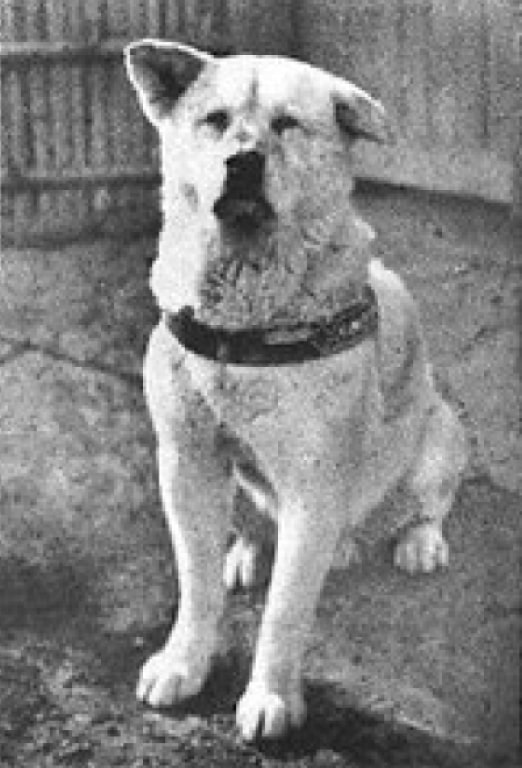A photo of the real Hachiko