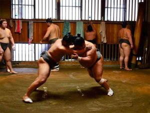 Sumo Experience Tour
