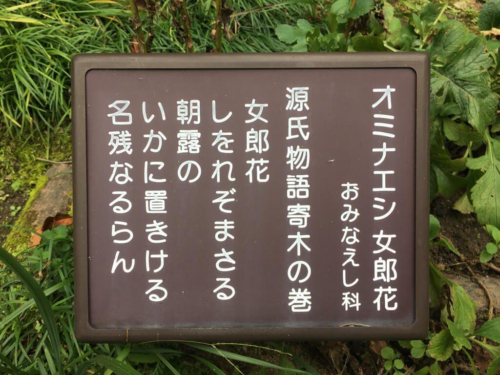 """Ominaeshi"" flower from Tale of Genji"