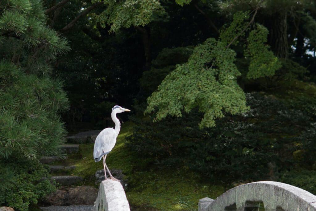 White heron found in the gardens