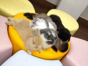 Rabbit Cafe Mimi