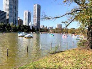 Shinobazu Pond - Ueno, Tokyo