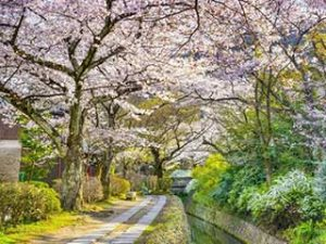 Philosopher's Path - Kyoto, Japan