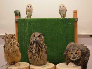 Owl Cafe - Harajuku, Tokyo, Japan