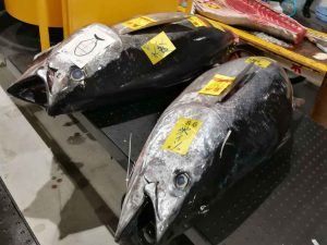 Toyosu Fish Market - Tokyo, Japan